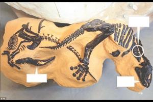 İki dinozorun ölümcül kavgası 10 milyon dolar edecek